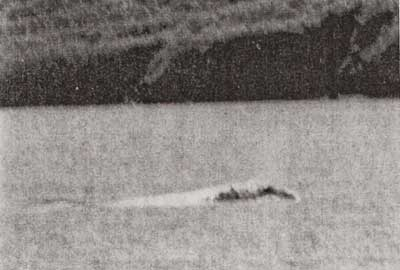 The sea creature observed in Uyak Bay in 1971